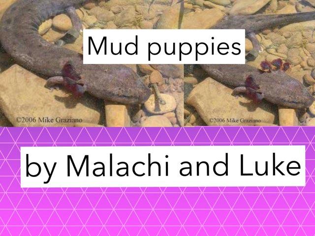 Mud puppies by Jennifer Alexander