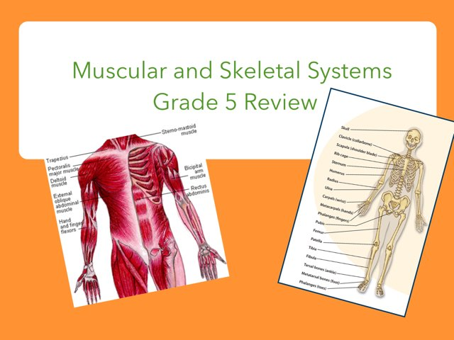 Muscular And Skeletal Systems by Jennifer Alexander