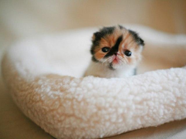 My Kitten Ginger  by Ali Alsuwaidi
