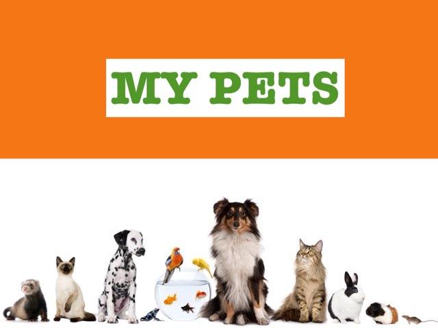 My Pets by Elena Campillo Dominguez
