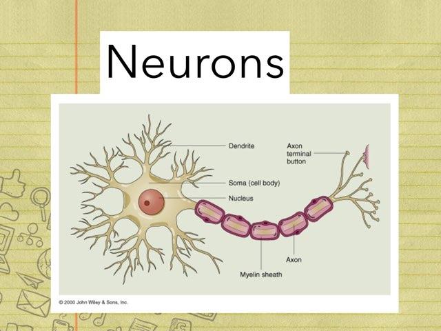 Neuron Puzzle by Bernadette Murphy