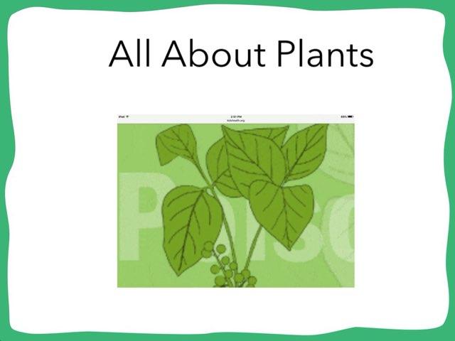 Nick Plants by Hulstrom 1st Grade