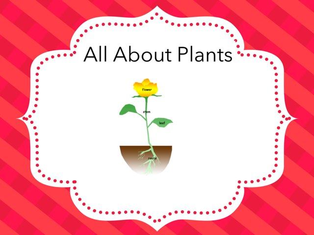 Nico Plants by Hulstrom 1st Grade