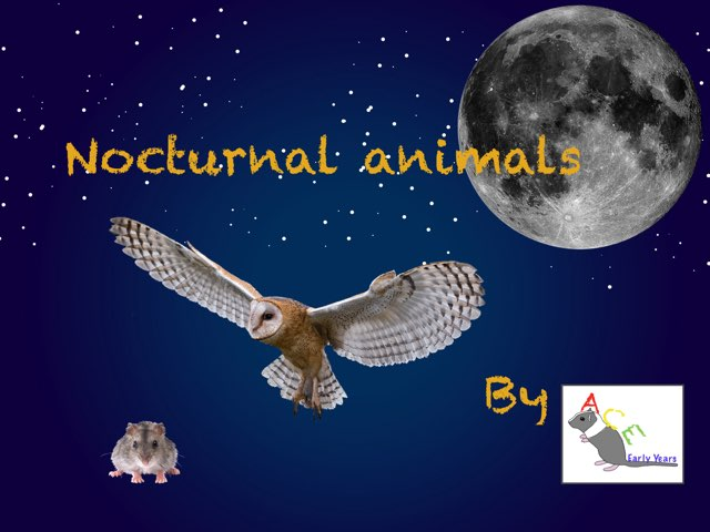 Nocturnal Animals by Ace Early Years