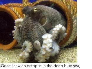 Octopus ( Tune Yankee Doodle) by Ma wert