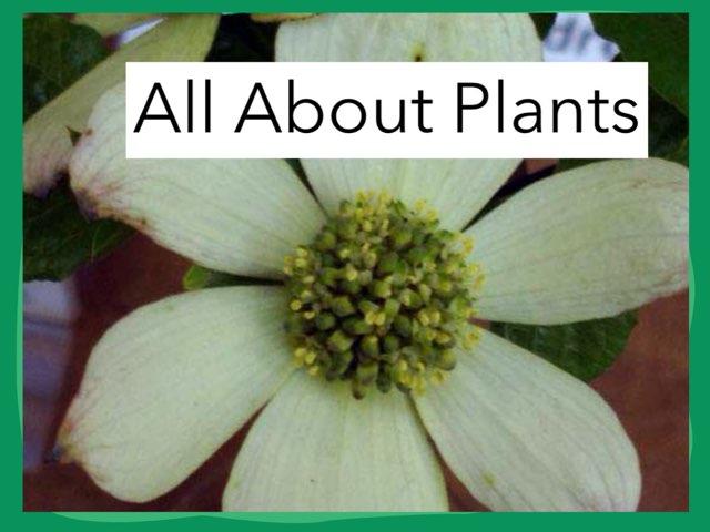Olivia Plants by Hulstrom 1st Grade