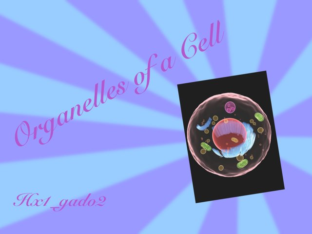 Organelles Of A Cell by hx1 gado2