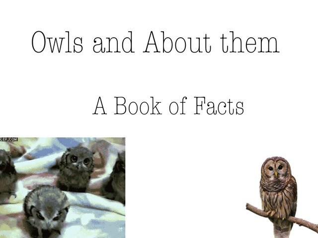 Owls And About Them by Alexandra Owl