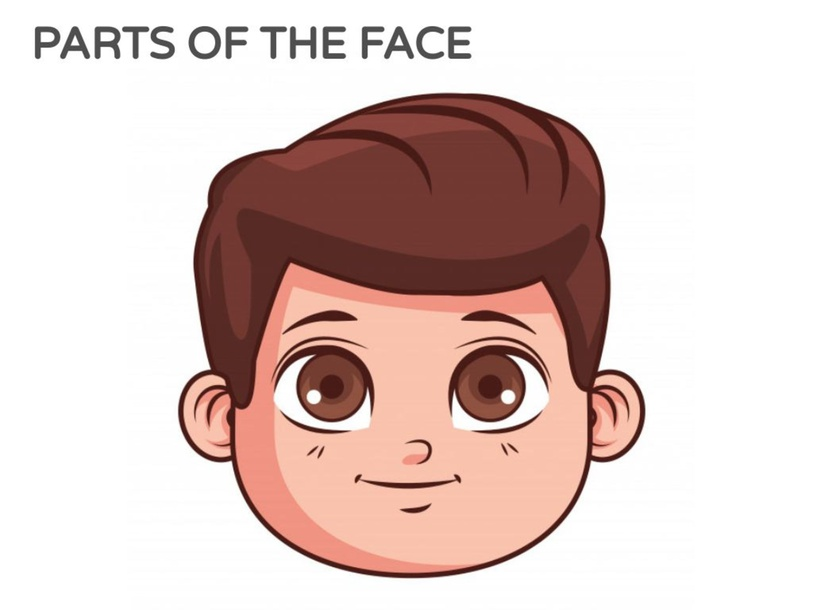 PARTS OF THE FACE! by MISS LULY