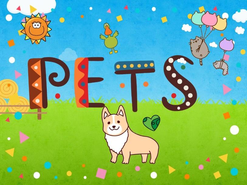 PETS- 3 YEAR QUIZ by VIR ZEG