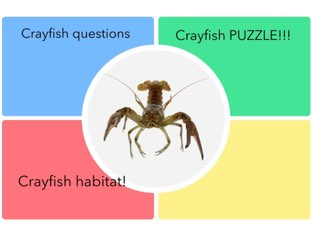 PJ's Cool Crayfish Game by Chris  Smith
