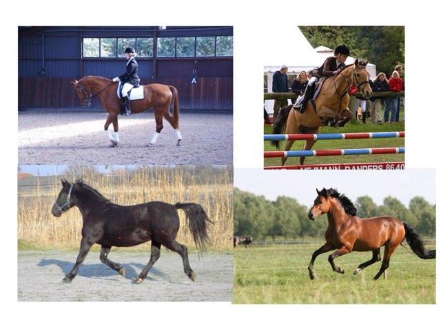 Paarden Quiz  by Isa Galbu