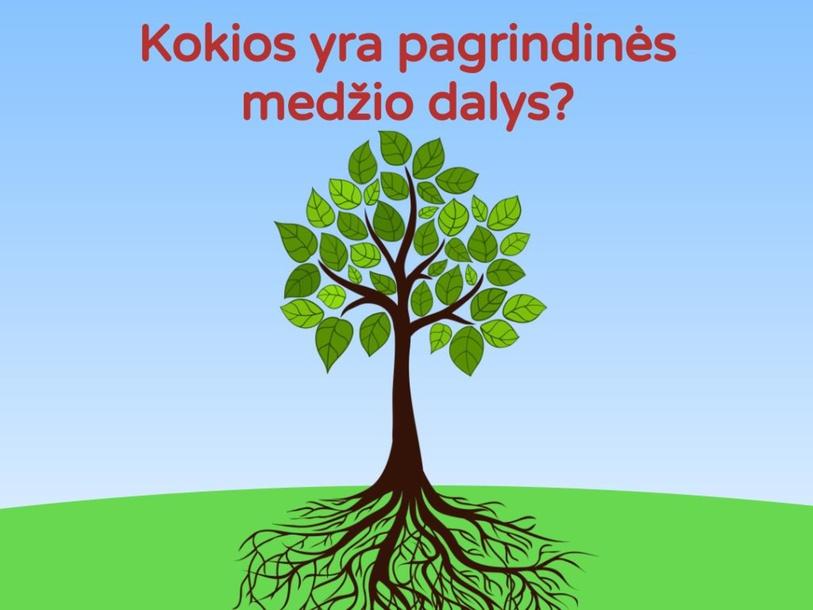 Pagrindinės medžio dalys by Eglė Balkauskaitė