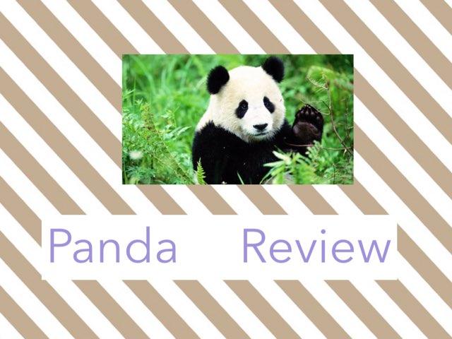 Panda Project by Rachel Koon