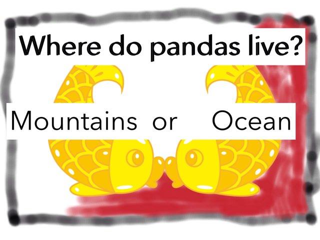 Pandas By Akacia by Paula Isaacson