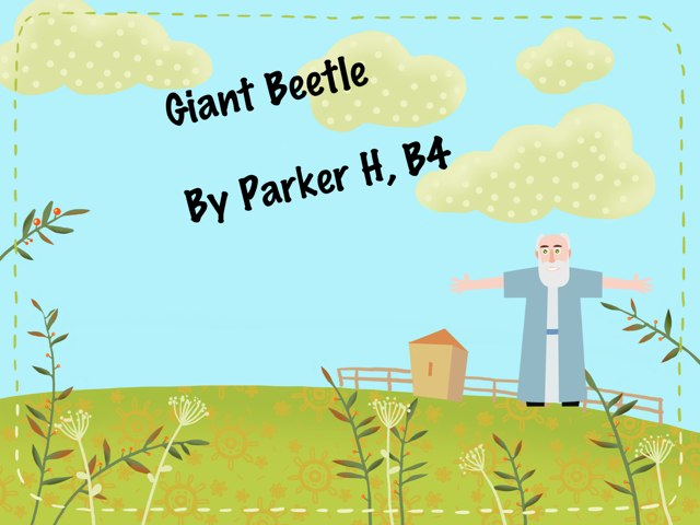 Parker's Beetle Project by Vv Henneberg