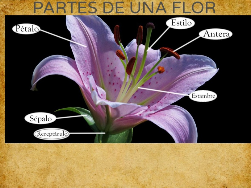 Partes de una flor by Leo Carrillo Fdez