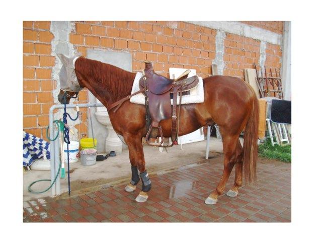 Parti del cavallo by Carmen Sturiale