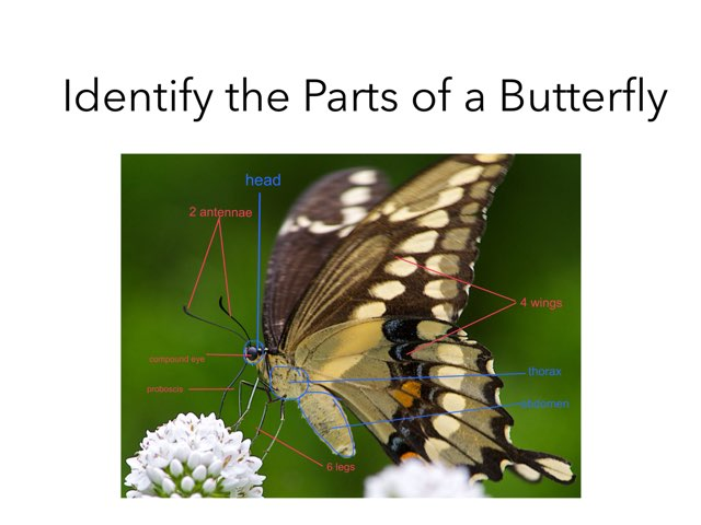 Parts Of A Butterfly by Room 207
