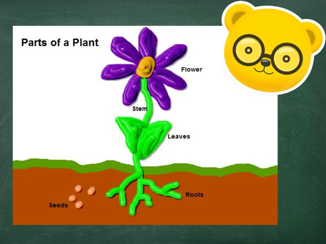Parts Of A Plant by Stacie Brimmage