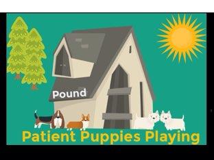 Patient Puppies Playing by Katrina Millard-Hurst