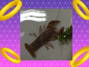 Patrick's Crayfish Game by i105 Room