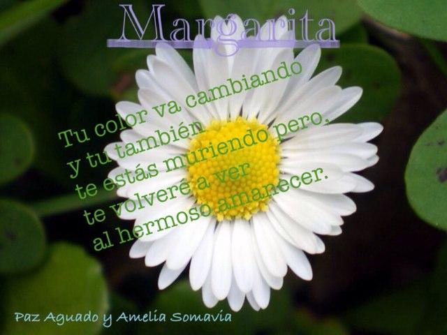 Paz Y Amelia Margarita by Vale Peraldi