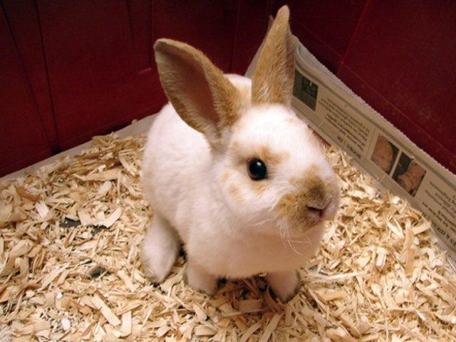 Pet Rabbits By Sanya by Keegan scelia