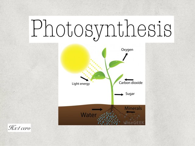 Photosynthesis by hx1 caro