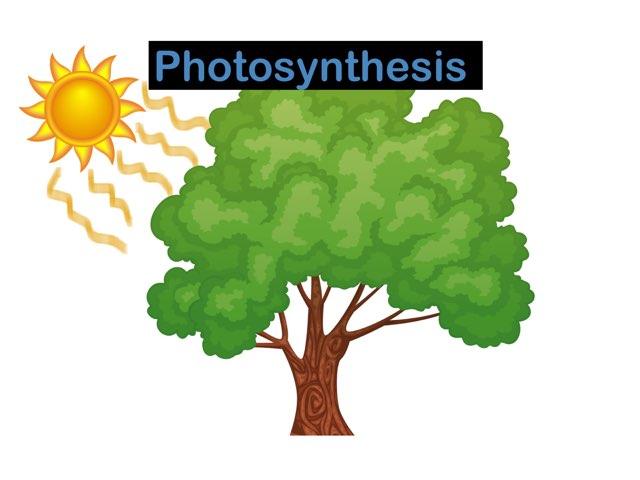 Photosynthesis by Jaeden White