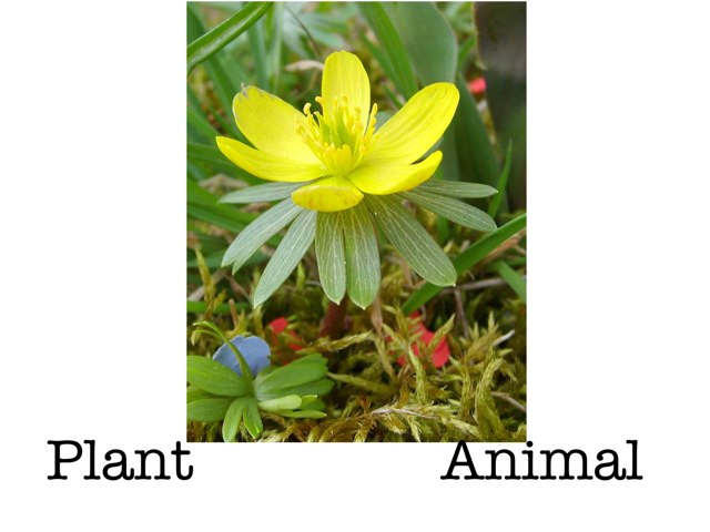 Plants Or Animals? by Gayle Gardner