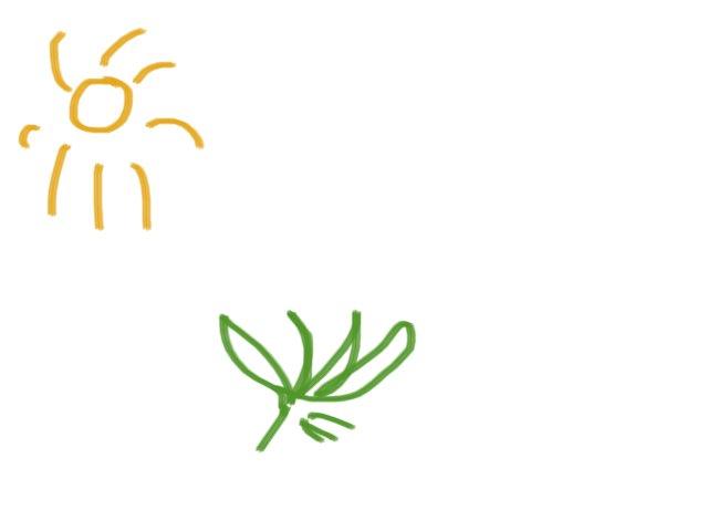 Plants by Miss Marsden