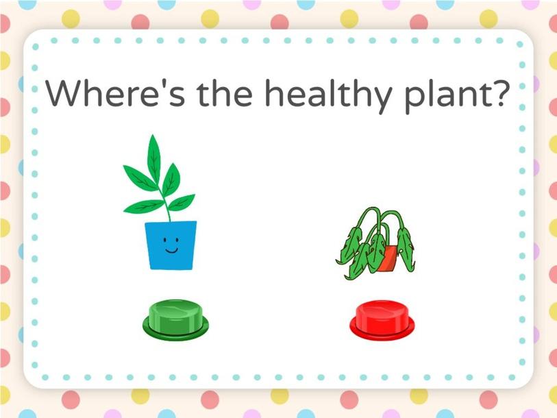 Plants by Jamie Vizcarra