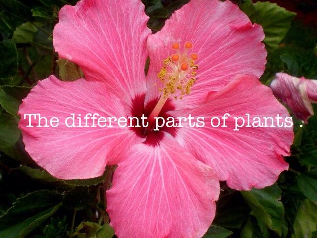 Plants by Dazlyne Casimri