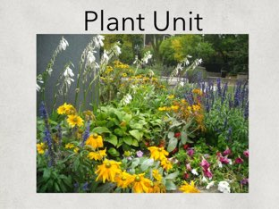 Plants by Michelle Knight