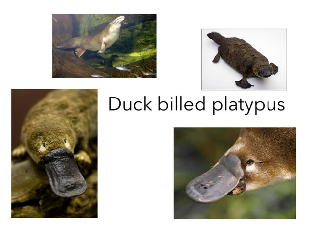 Platypus by Leanne Walker