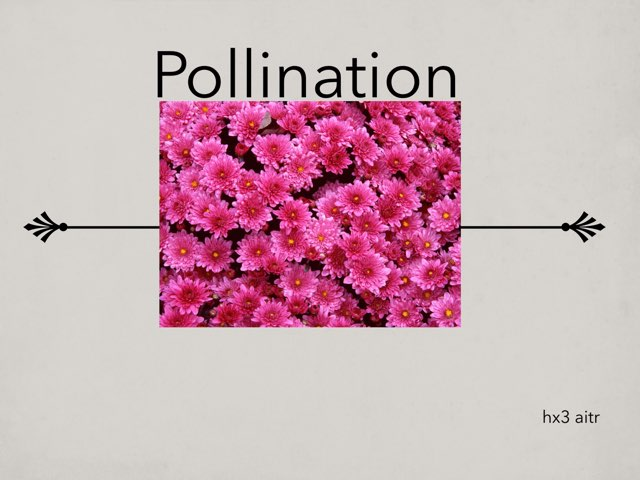 Pollination Quiz by hx3 aitr