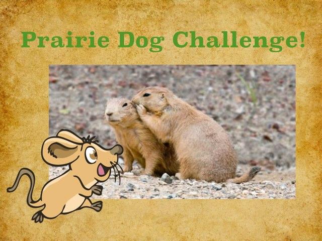 Prairie Dogs by Joanne Hwang