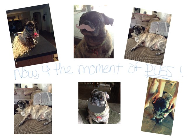 Pug Time!!! by Lisa Eskina