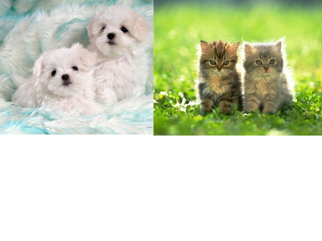 Pups And Kitties by DIA Rose