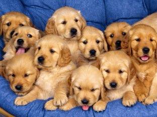 Put The Dogs Back by Bisni khaibakh