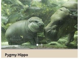 Puzzle Hippo by Oscar Lim