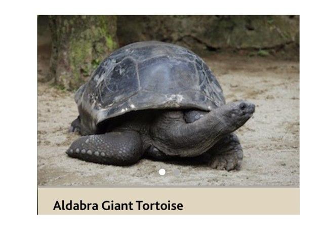 Puzzle Tortoise by Oscar Lim