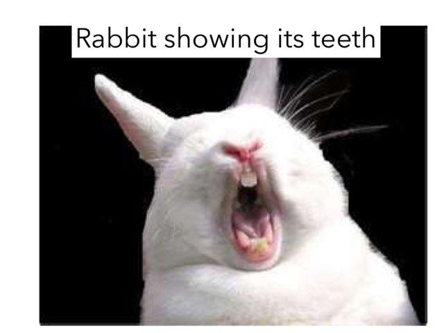 Rabbits By Sienna by Keegan scelia
