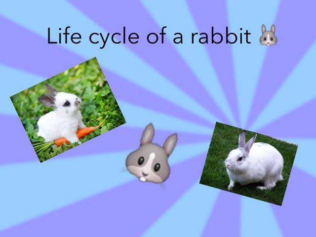 Rabbits Life Cycle By Radhika Sharma Educational Games For Kids On Tinytap