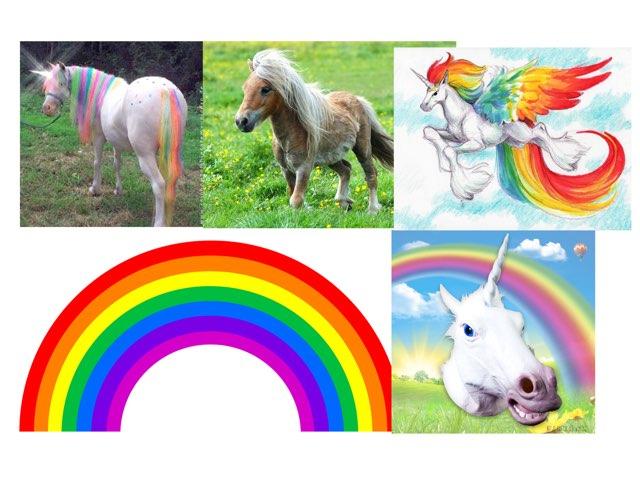 Rainbow Stuffs by Gavi Wald