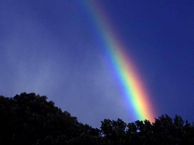 Rainbow by Evangeline Alexander