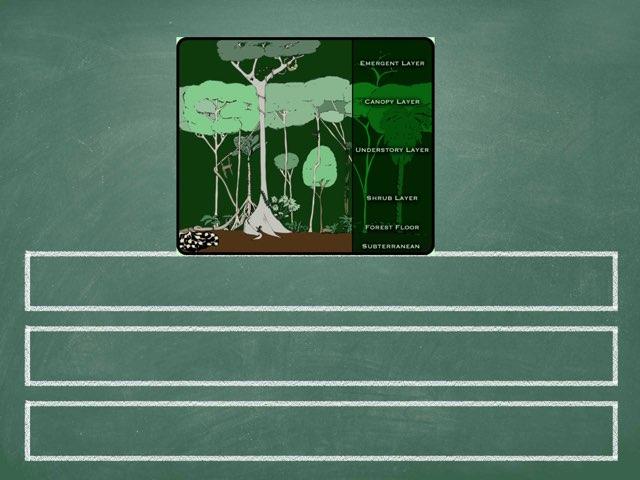 Rainforest Layer Quiz by Y6F Y6F