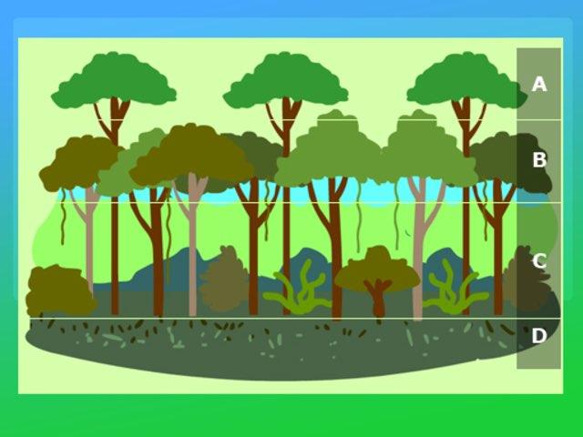 Rainforest layers Quiz by Y6F Y6F