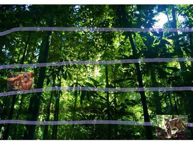 Rainforest by Y6F Y6F